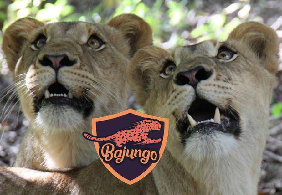 Bajungo Lions